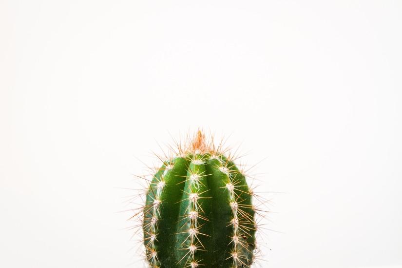 cactus-2561697_1920